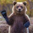Ученые объяснили, почему медведи не толстеют во время спячки