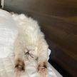 10 фотографий котов, которые точно поднимут вам настроение. Только взгляните на пятое фото!