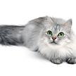 Только посмотрите, как кошка шипит, когда видит упаковку корма с изображением кота! Вы такое видели? (ВИДЕО)