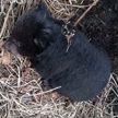 В Приморье спасли человека и медвежонка