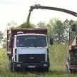 Как проходит жатва и заготовка кормов на севере и на юге Беларуси?