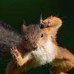 «Мне нужны орешки»: вероломные попытки белки пробраться в дом удивили пользователей сети