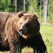 Россияне назвали животное, которое, по их мнению, олицетворяет страну