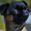 Британец обвинил собаку в расизме