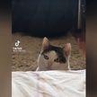 Кошка, которая смотрит на все осуждающим взглядом, заставила интернет хохотать (ВИДЕО)