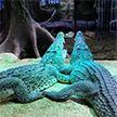 Крокодил, которого Фидель Кастро подарил советскому космонавту, откусил руку шведу