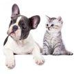 Кот хотел показать собаке, какой он суровый, но только заставил хохотать всех до слез. Посмотрите – это поднимет вам настроение! (ВИДЕО)