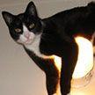 Милые питомцы: 10 фото кошек, которые вызывают улыбку. Как вам третий озорник?