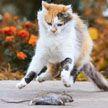 Власти Нидерландов планируют судить хозяев кошек-охотников