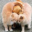 Милые пушистики! 17 фото домашних животных, от которых тепло на душе