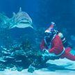 Праздник под водой: в океанариуме Будапешта установили ёлку