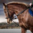 Лошадь нашла у наездницы смертельную болезнь и спасла ей жизнь
