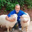 «Похожи на плюшевые игрушки!» Хозяин кафе с овечками выложил фото питомцев до и после мытья
