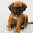 Названы самые популярные клички для собак