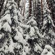 Посмотрите, какая красота! Настоящая зимняя сказка в белорусском лесу