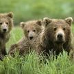 80-летняя пенсионерка из Словении пережила нападение сразу трёх медведей