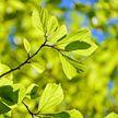 3 апреля стартуют акции по озеленению