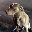 Пес спас семью от пожара