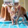 Поросячья радость: кафе с маленькими свинками открыли в Токио