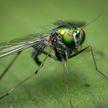 Лечебный жир из личинок мух начали делать в Подмосковье