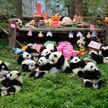 Милота зашкаливает: панды веселятся на вечеринке в честь дня рождения
