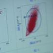 Белорусские ученые изучают лечение аутоиммунных заболеваний стволовыми клетками