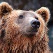 В России медведь напал на группу туристов и убил человека