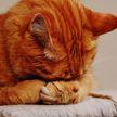«Я так же злюсь, когда не могу влезть в свою одежду»: кот застрял в калитке и рассмешил Сеть