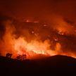 Около миллиарда животных погибли за четыре месяца пожаров в Австралии