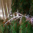 Белорусская ремесленница сплела из бисера 4-метровое дерево