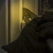 В Минске хозяин СТО увидел, как ночью обворовывают его офис и сам задержал грабителей