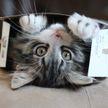 Ученые рассказали, почему коты так любят коробки