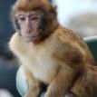 Неожиданный сосед: россиянин обнаружил на своем балконе обезьяну (ВИДЕО)