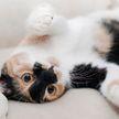 Кот показал забавный способ сбежать от неприятного разговора