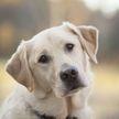 В Великобритании собаки определили у женщин рак по запаху