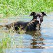 Хотите поднять себе настроение? Посмотрите, что делает собака, обожающая водные процедуры! Такого вы еще не видели!(ВИДЕО)