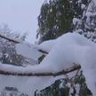 В Австралию пришла снежная зима