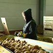 Как в Беларуси сохраняют урожай до весны
