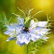 Ученые обнаружили растение, которое может помочь лечить COVID-19