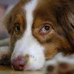Собака угнала джип и врезалась в здание галереи в США