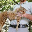 «Кошачья лиса»: новый вид хищников обнаружили  во Франции