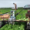 Находка для дачника: британские ученые научили робота работать в огороде