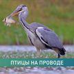 Теперь птицам, обитающим в Беларуси, можно звонить и писать в Telegram