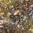 Фотофакт: сбежавшая от хозяев мартышка прижилась в лесу в Гомеле