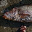 Рыбак поймал 150 редчайших рыб «с золотым сердцем» и стал миллионером