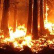СМИ: жители Аризоны эвакуируются из-за природных пожаров
