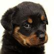Рассердившийся из-за икоты щенок стал звездой соцсетей. Посмотрите, какой смешной!