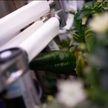 На МКС ученые впервые вырастили овощ