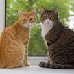 Живодёрство в Мозыре: пенсионер сбросил кошек с балкона