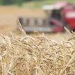 Комбайнер в Лепельском районе погиб на работе в поле
